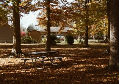 forest and bench in park